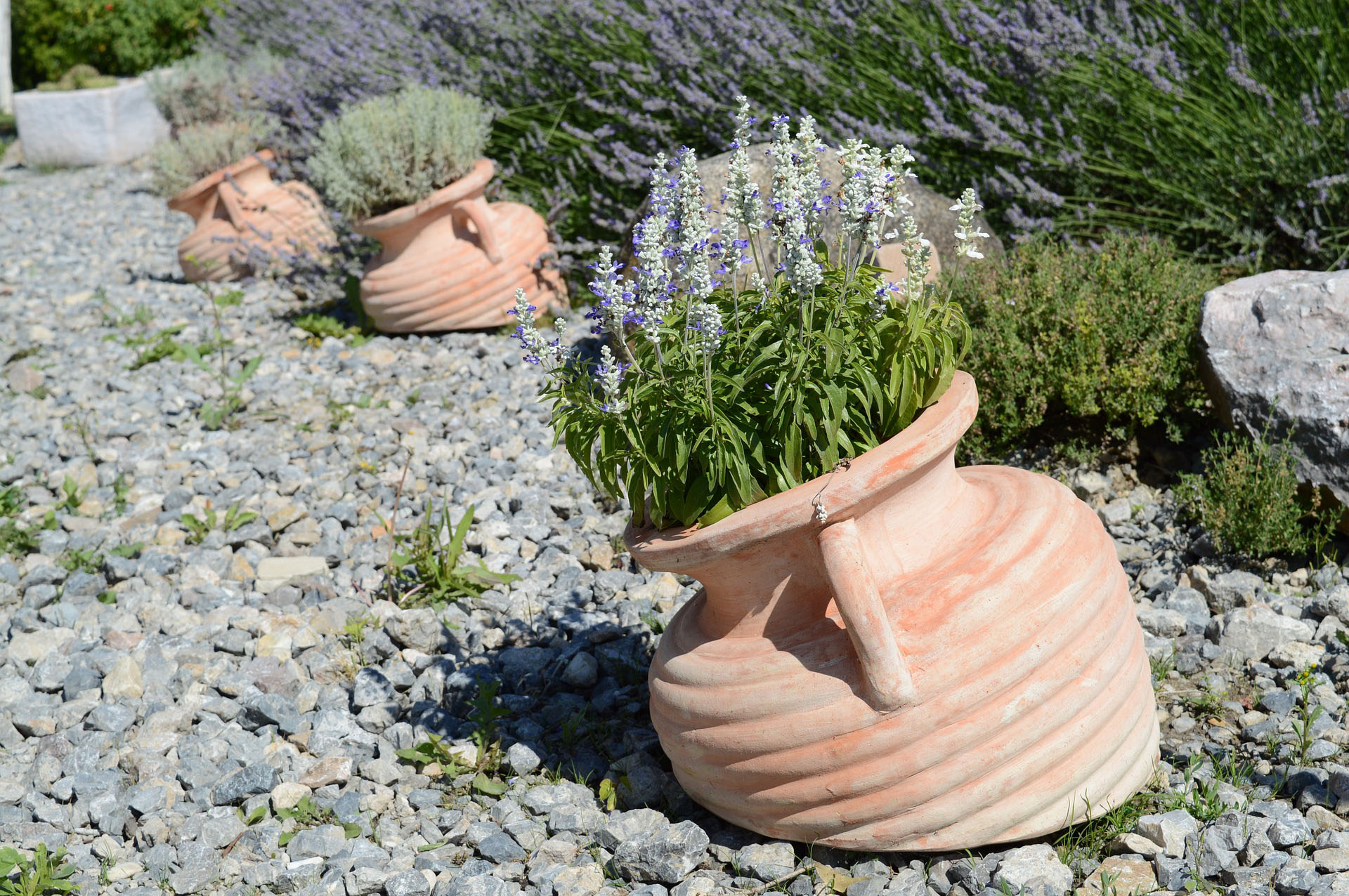Jakie rośliny ozdobne do małego ogrodu