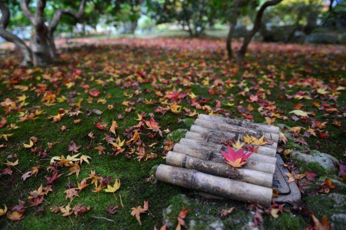 Przegląd drzew liściastych pasujących do każdego ogrodu