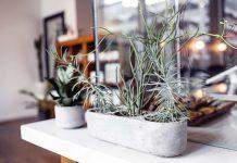 Mieszkanie z dużą ilością zieleni - jak je urządzić