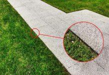 Obrzeża trawnikowe - doskonały pomysł do każdego ogrodu