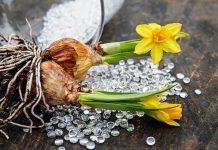 Jak sadzić cebulki kwiatowe