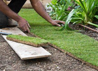 Jak dbać o trawnik po zimie