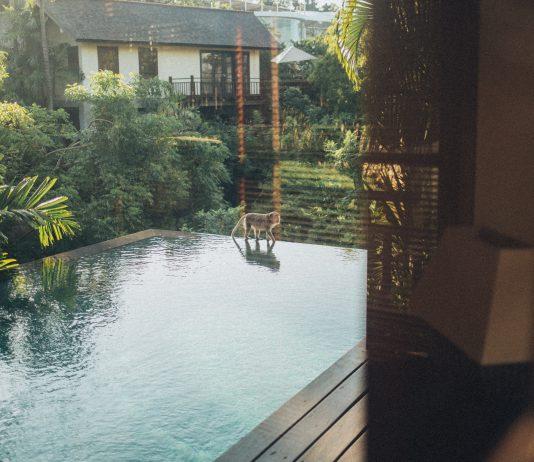Zielona woda w basenie